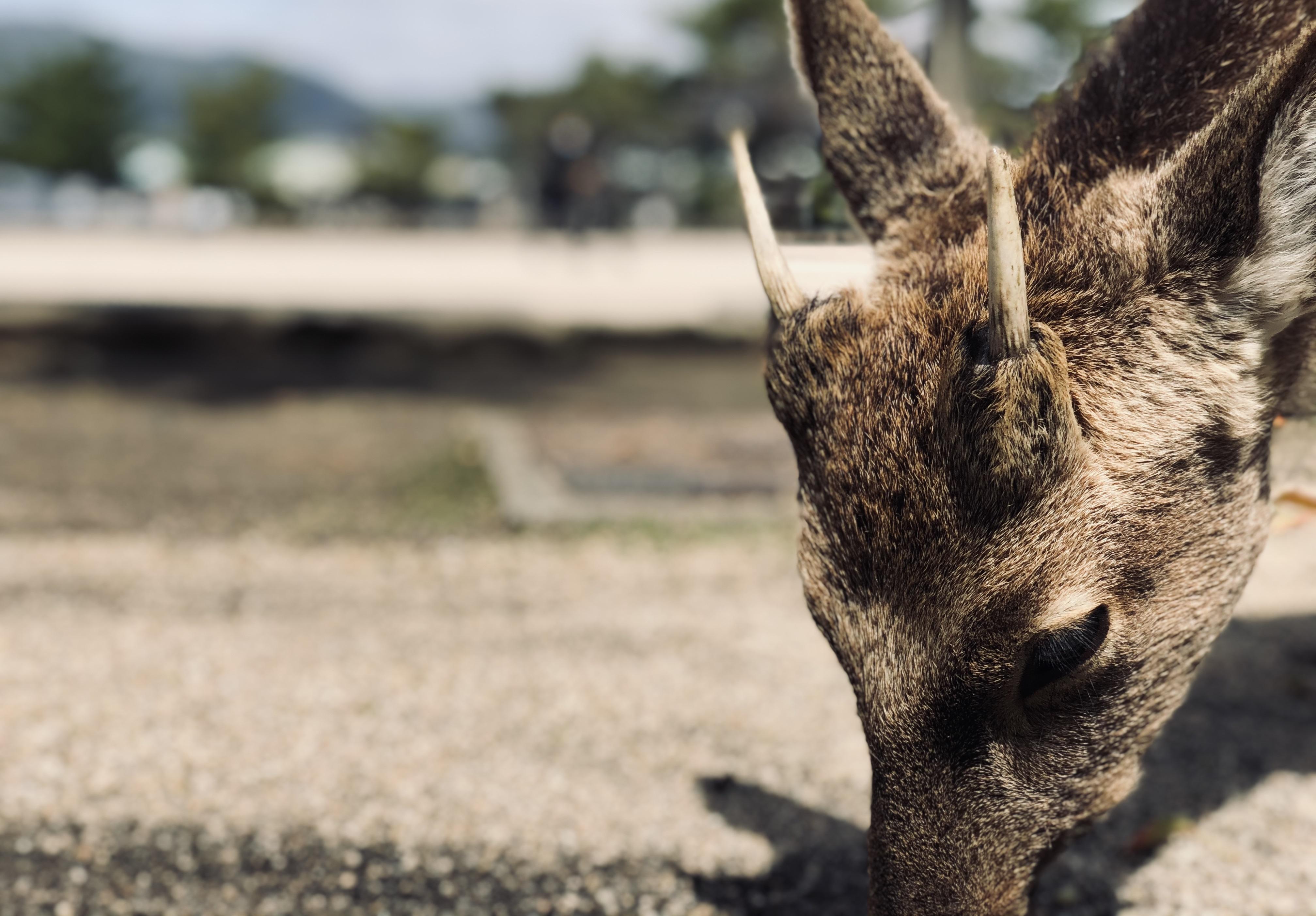【鹿に注意】