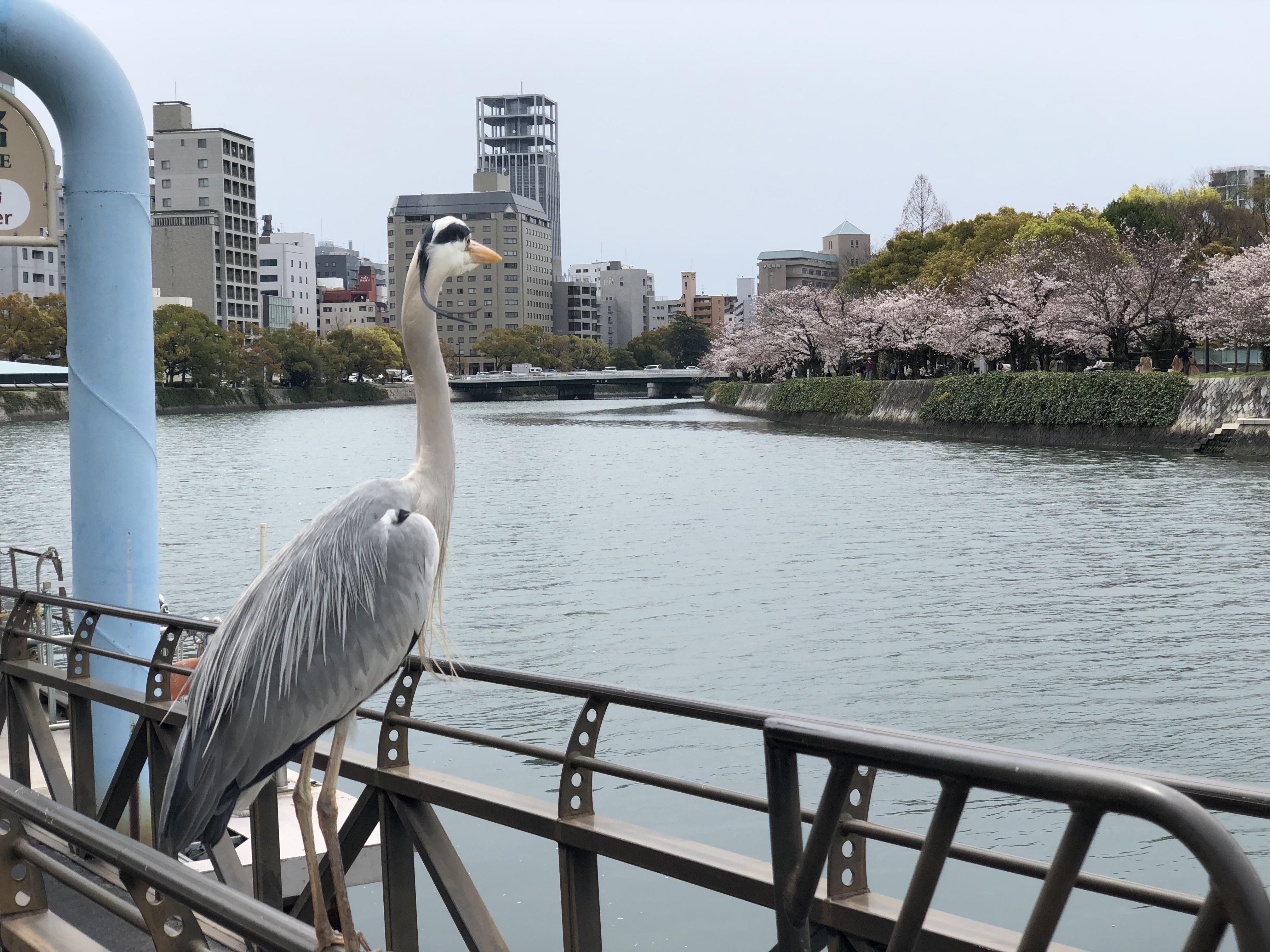 【鳥と川】