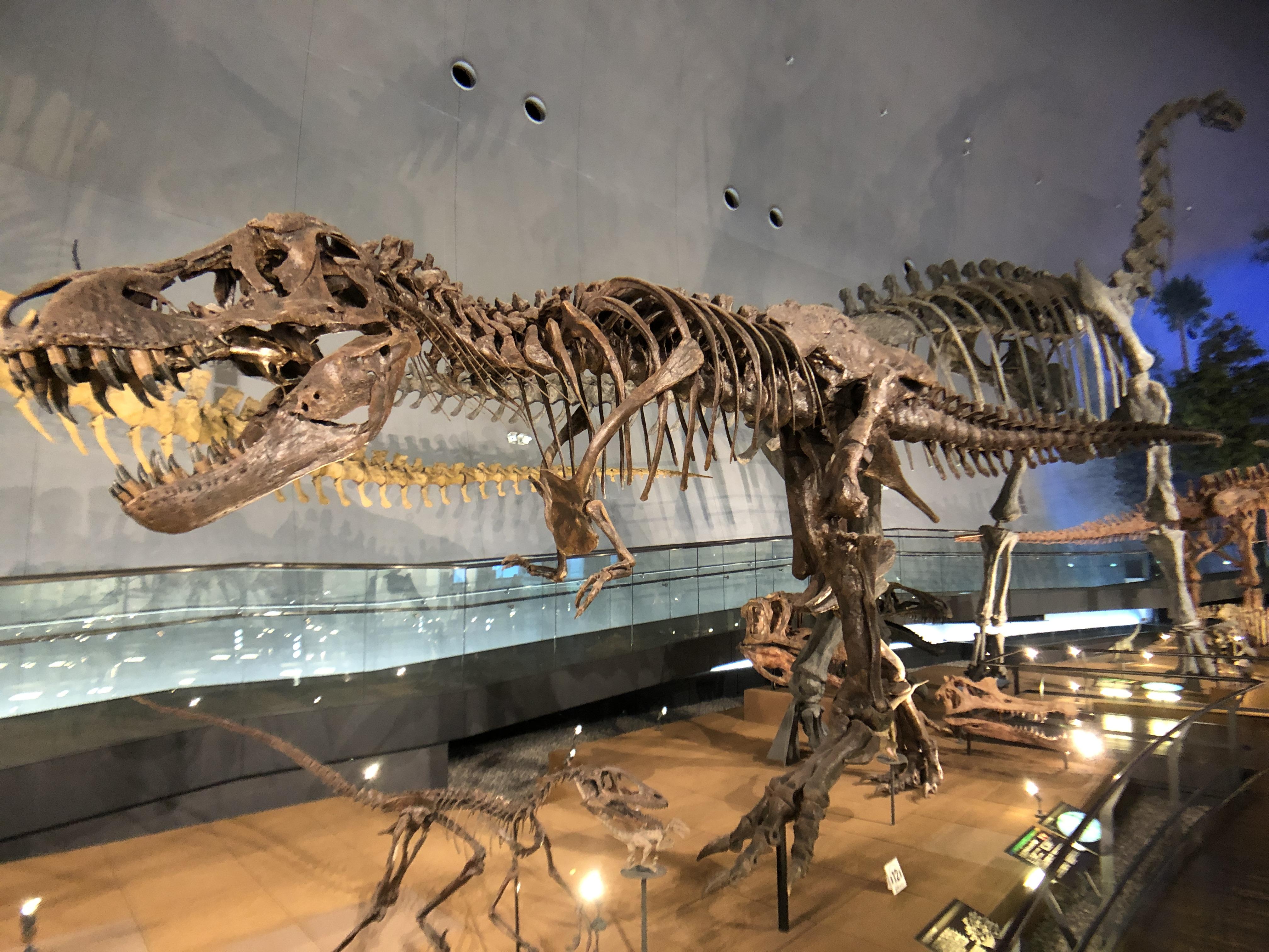 【ティラノサウルス】